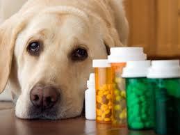 farmaci-veterinari-parafarmacia
